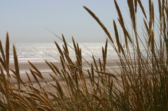 dunes & sea