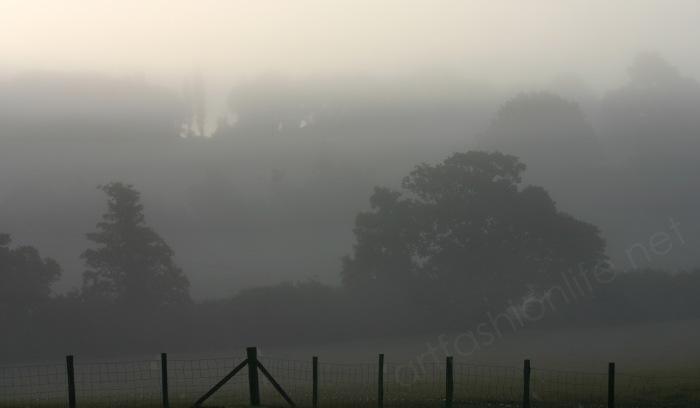 early summer mist