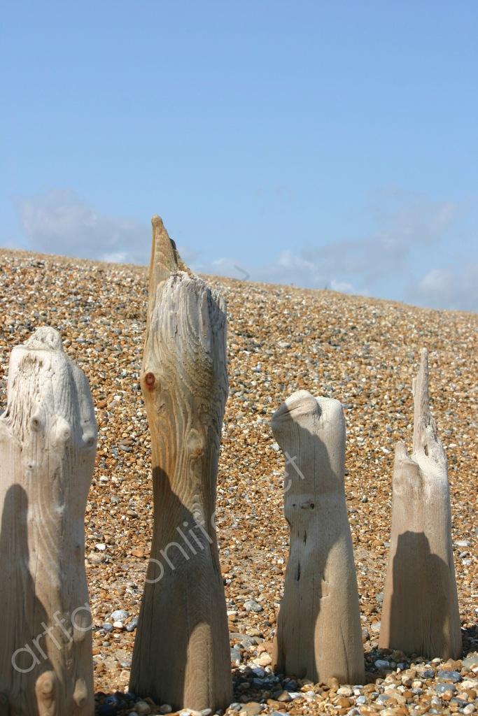 sea worn wood